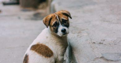 Multa fino a 10.000 euro: ecco cosa aspetta a chi abbandona il proprio animale domestico