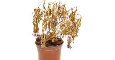 Ecco come far tornare in vita una pianta secca dopo le vacanze estive