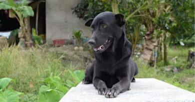 La commovente storia di Mino, il cane che da tre anni non si muove dalla tomba del suo miglior amico, un bambino di 2 anni