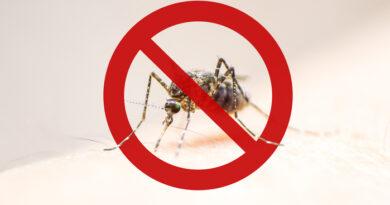 Vuoi liberarti per sempre da zanzare, formiche, scarafaggi, mosche e topi? Questo oggetto in casa risolverà il tuo problema